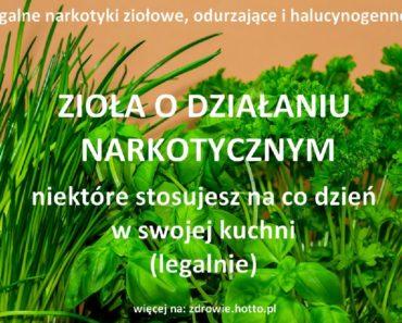 zdrowie-hotto-pl-ziola-o-dzialaniu-narkotycznym-odurzajacym-halucynogennym-stosujesz-je-w-kuchni-legalnie