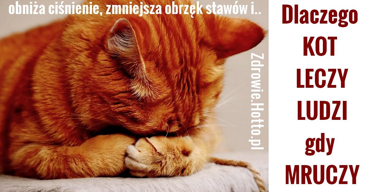 zdrowie.hotto.pl-mruczenie-kota-leczy