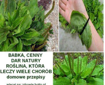 zdrowie.hotto.pl-babka-lancetowata-leczy-przepisy-domowe-sposoby