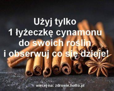 zdrowie.hotto.pl-cynamon-zastosowanie-nietypowe