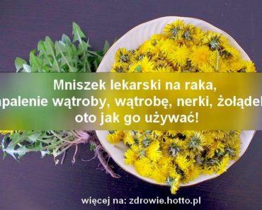 zdrowie.hotto.pl-mniszek-lekarski-przepisy-syrop-herbata-z-korzenia-wlasciwisci