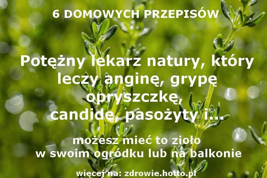 zdrowie.hotto.pl-tymianek-wlasciwosci-zastosowanie-6-przepisow-leczy
