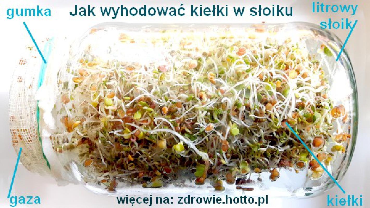 zdrowie.hotto_.pl-jak-wyhodowac-kielki-w-sloiku