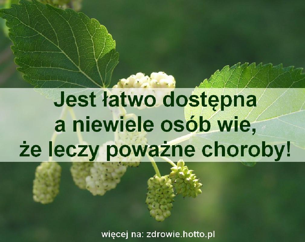 zdrowie.hotto.pl-morwa-biala-wlasciwosci-zastosowanie