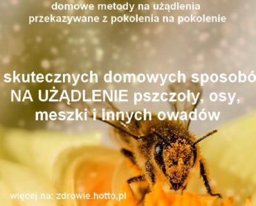 zdrowie.hotto_.pl-na-uzadlenia-osy-pszczoly-meszki-inne-owady-13-domowych-przepisow