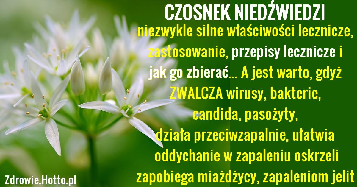 zdrowie.hotto.pl-czosnek-niedzwiedzi-przepisy-wlasciwosci-zastosowanie
